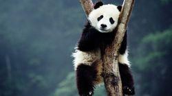 Plantes et animaux : les espèces disparaissent mille fois plus vite qu'avant l'arrivée de