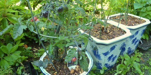 Vous n'avez pas de jardin? Voici les jardins mobiles!