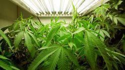 Marijuana médicale: la Cour fédérale inondée de