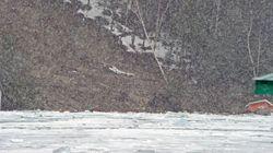 Deux chalets emportés par un glissement de terrain dans les
