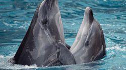 L'UE veut interdire la pêche au filet dérivant pour protéger dauphins et