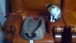 Deux chats jouent ensemble avec une canne à pêche