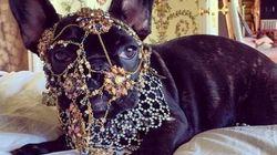 Lady Gaga dans le viseur de PETA avec des photos de son chien sur