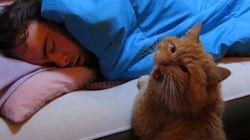 Le chat: le parfait remplaçant du réveil-matin