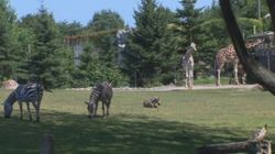 Zoo de Granby : une publicité qui fait