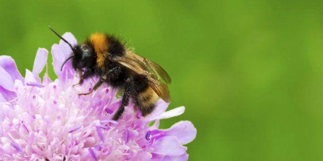 Les pesticides affectent les abeilles, mais aussi les