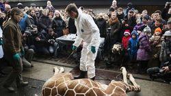 Le zoo de Copenhague abattra d'autres