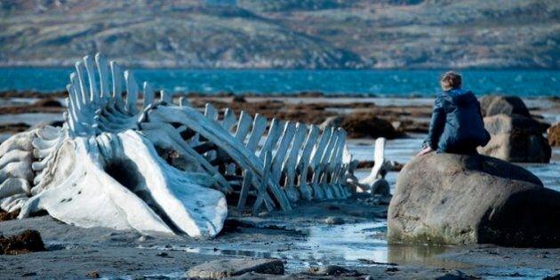 «Leviathan» d'Andrey Zvyagintsev en compétition à