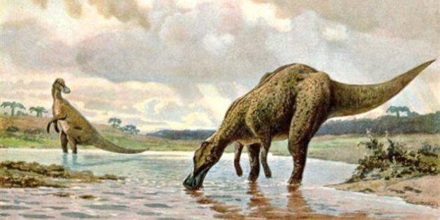 Un fossile de dinosaure est découvert au