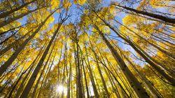 Tensions entre l'industrie forestière et la société civile: une forêt de solutions à portée de main - Nicolas Mainville, dire...