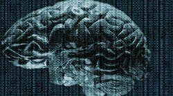 Étude sur le cerveau: des scientifiques découvrent une activité cérébrale