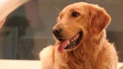 La différence entre un vétérinaire et un