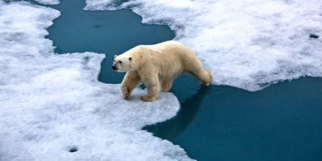 Réchauffement climatique: l'année 2013 a été la 6e la plus chaude de