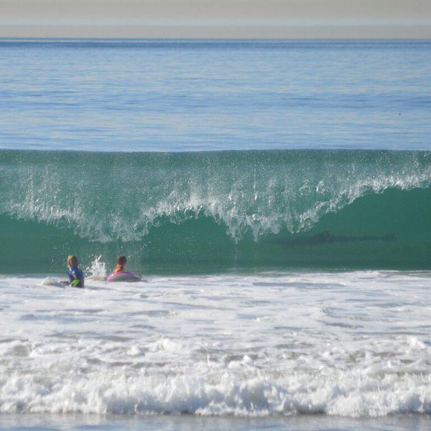 Un requin se cachait dans le creux de la vague
