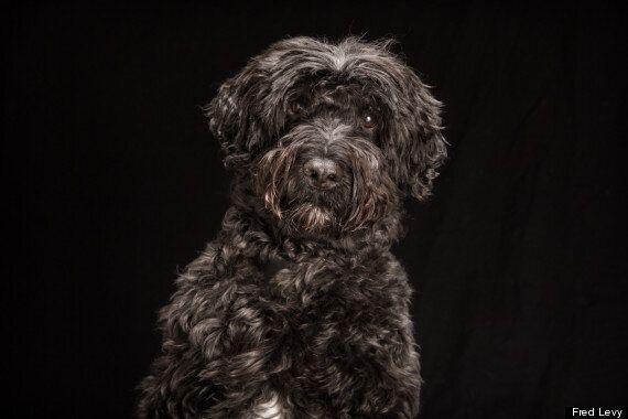 La beauté des chiens noirs dévoilée dans une magnifique série de