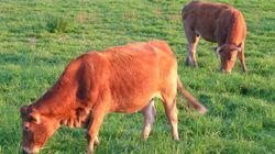 Guerre aux éleveurs, guerre aux animaux d'élevage!