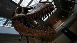 Dites bonjour au Torvosaurus