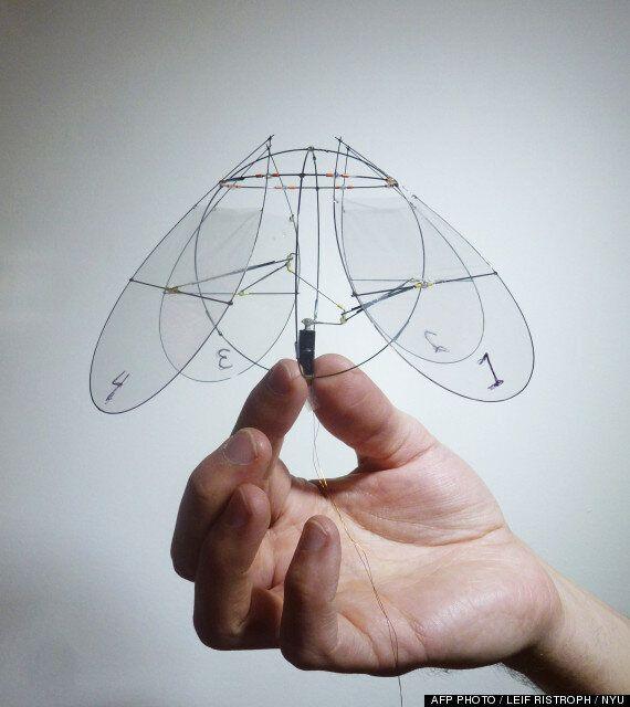Des chercheurs créent un robot qui vole comme une méduse