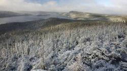 L'industrie forestière en panique face à sa propre incompétence - Nicolas