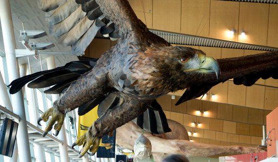 Une sculpture du Hobbit s'effondre en Nouvelle-Zélande à la suite d'un tremblement de terre