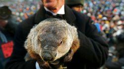 Le jour de la marmotte, qu'est-ce que c'est? D'où ça vient?