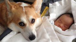 L'attention de ce chien pour ce bébé va vous faire fondre