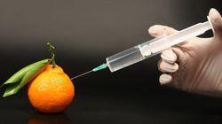 OGM: le Québec doit faire bande à part - Yanick