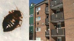 Punaises de lit: des locataires d'HLM de Laval envisagent des