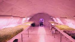 Cette ferme dans un bunker en plein cœur de Londres va vous