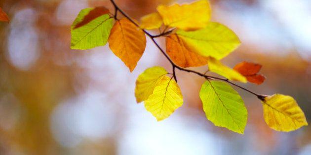 Canada: un automne normal, selon