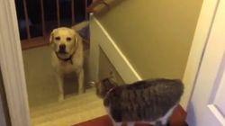 Ces chats feraient de bons (mais cruels) gardes-frontières