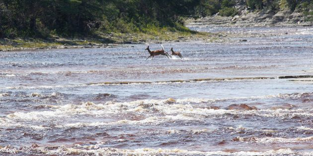 Anticosti: Martine Ouellet juge l'entente entre Hydro-Québec et Pétrolia