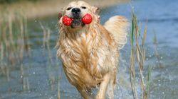 5 conseils pour aider votre chien à supporter la
