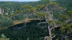 Rendez-vous de la forêt: Québec doit prioriser la conservation pour assurer la durabilité de l'industrie - Nicolas