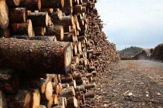 Rendez-vous de la forêt: Québec doit prioriser la conservation pour assurer la durabilité de