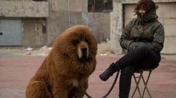 Le zoo chinois qui faisait passer un chien pour un lion ferme ses
