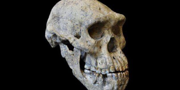 Un crâne qui en révèle plus sur notre