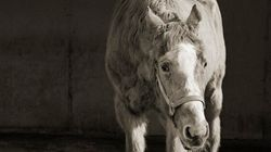 Une photographe a immortalisé les animaux en fin de