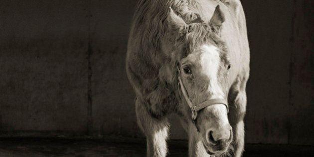 «Elderly animals»: Isa Leshko a photographié les animaux en fin de vie