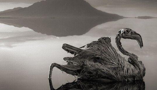 Ne vous baignez jamais dans ce lac qui change les animaux en pierre