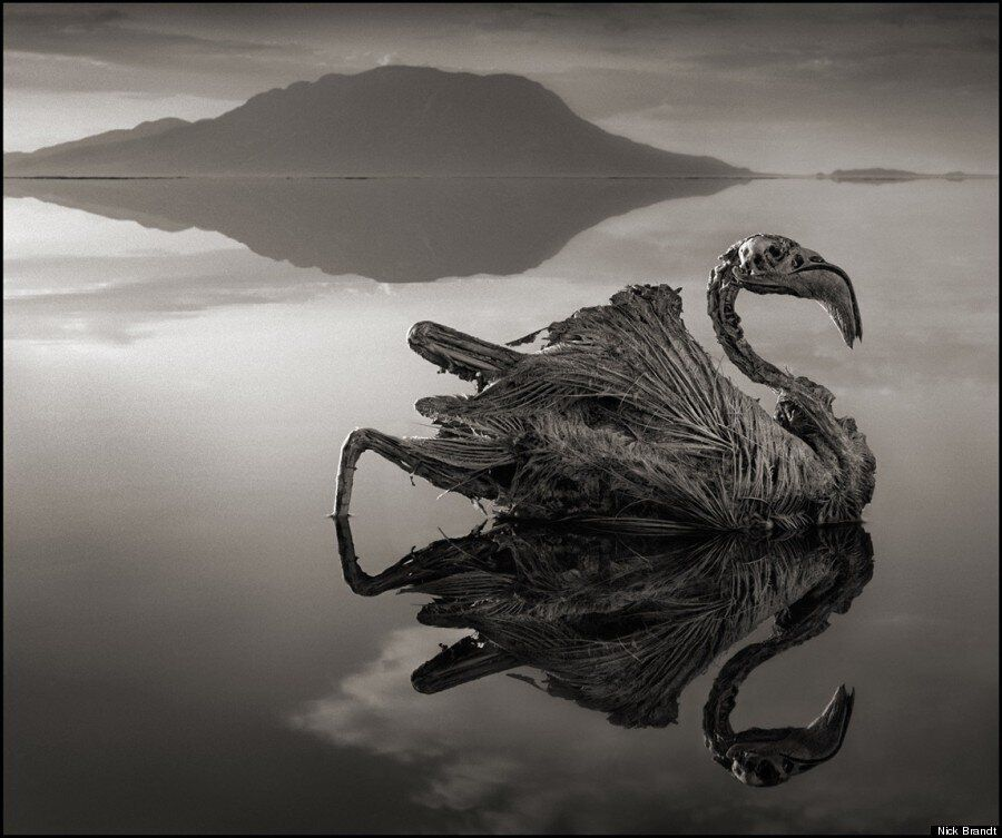 Les incroyables photos d'animaux transformés en pierre du lac Natron en Tanzanie