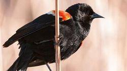 Un oiseau fait la loi au parc Jarry