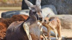 「こどもの日」動物の赤ちゃん大集合。全国の動物園が自慢の赤ちゃんをアップ