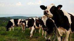 L'élevage animal à petite échelle, pas si vert que