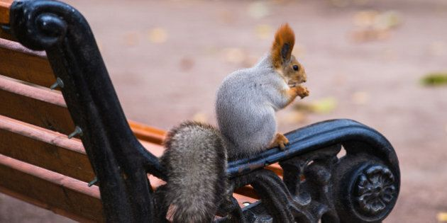 home alone. a squirrel on a...