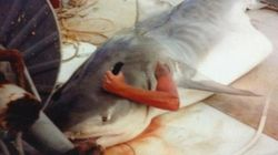 Il poignarde un requin... de