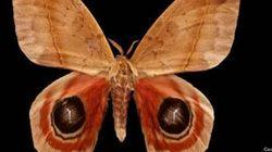 Papillons de nuit, par Alain Lefort