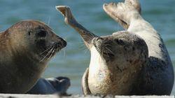Les phoques sont exclus de l'accord de libre-échange avec