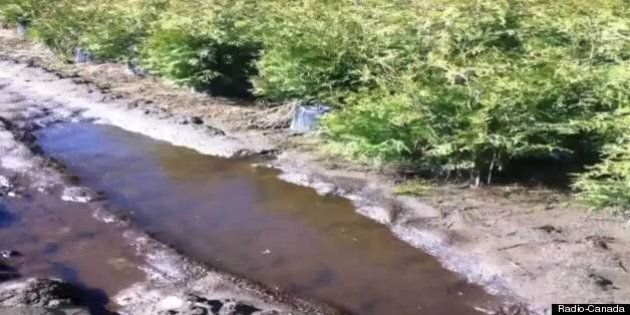 Pipeline d'Enbridge: Équiterre et Greenpeace demandent à Québec