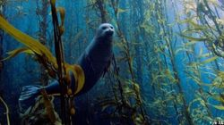 Les plus belles photos sous-marines de 2013